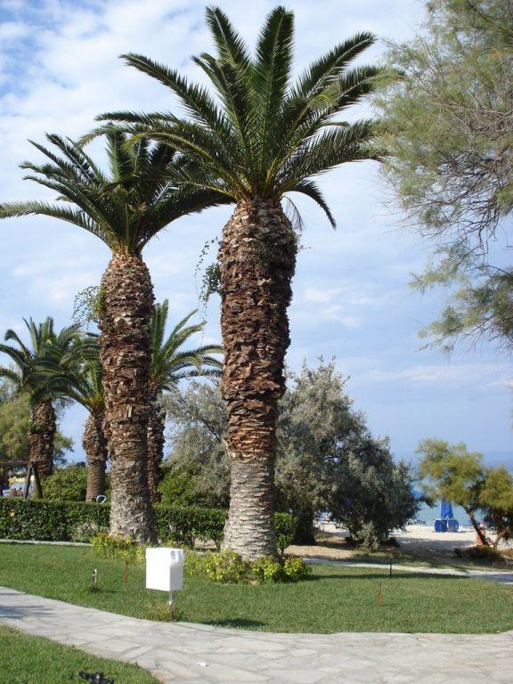 Hotel Bomo Pallini Beach 4* - Halkidiki Kassandra 7