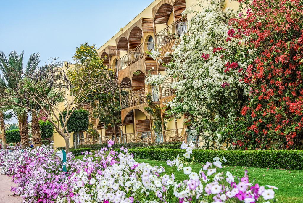 Hotel Desert Rose 5* - Hurghada 14