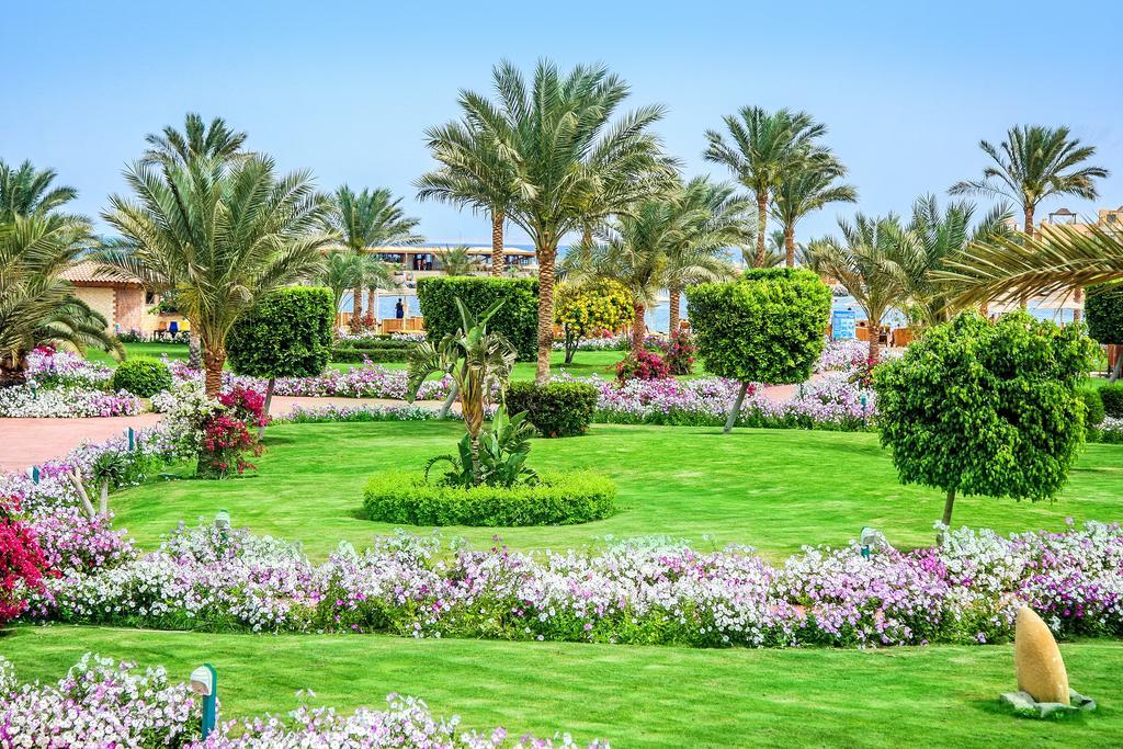 Hotel Desert Rose 5* - Hurghada 17