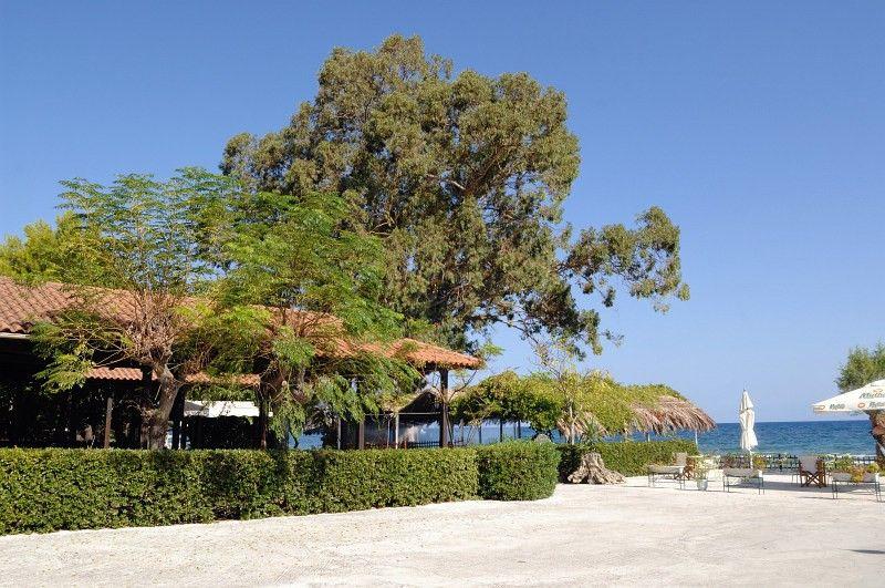 Mimoza Apart Hotel 3* - Zakynthos Argassi 9